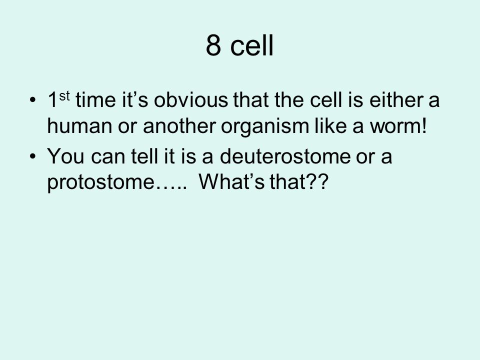 8 cell 1 st time it's obvious that the cell is either a human or another organism like a worm! You can tell it is a deuterostome or a protostome….. Wh