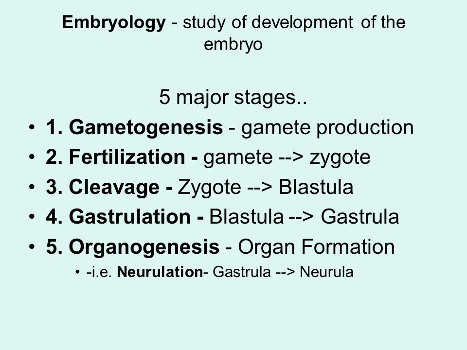 Embryology - study of development of the embryo 5 major stages..