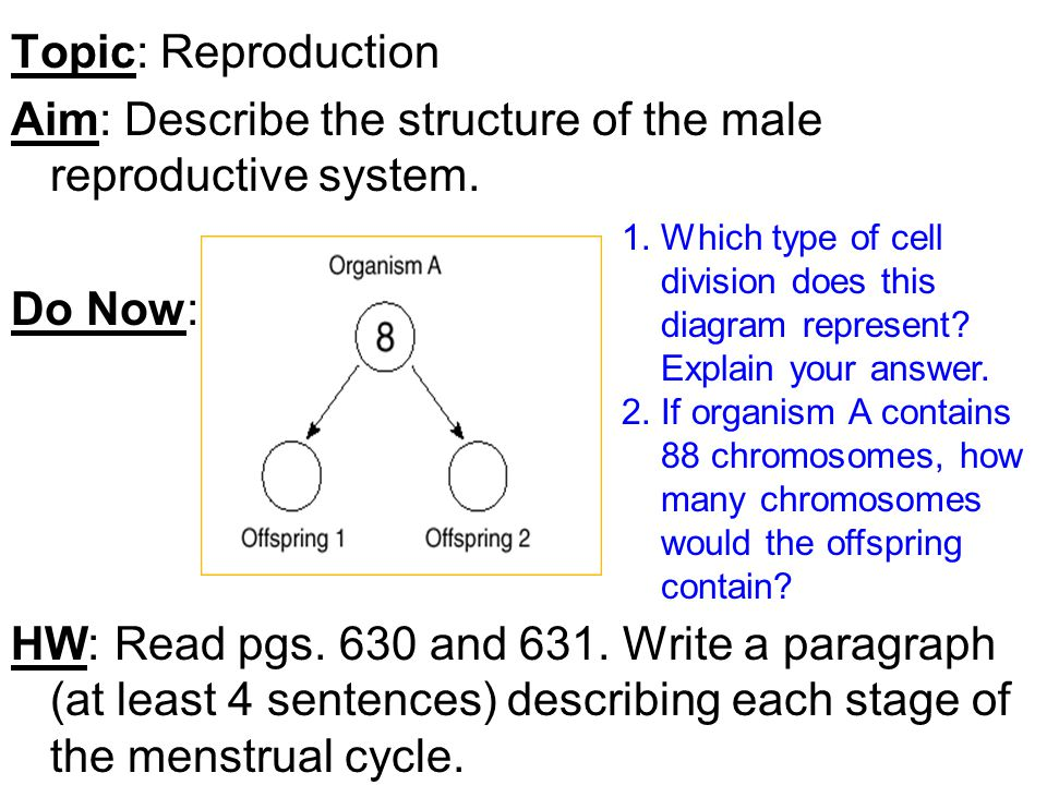 Topic reproduction aim describe the structure of the male topic reproduction aim describe the structure of the male reproductive system ccuart Gallery