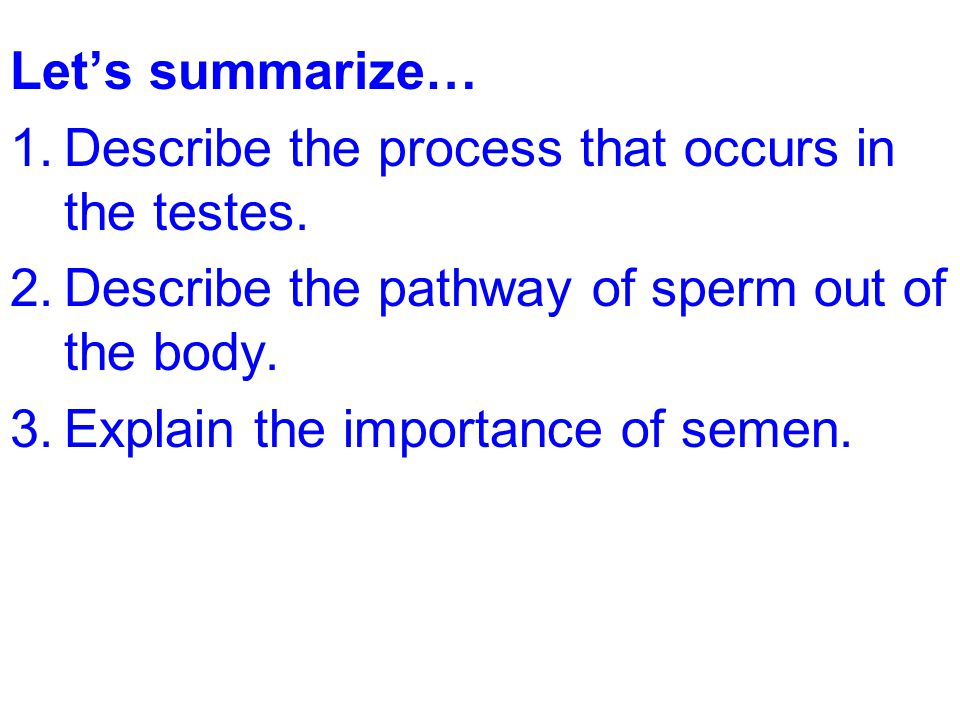 Let's summarize… 1.Describe the process that occurs in the testes. 2.Describe the pathway of sperm out of the body. 3.Explain the importance of semen.