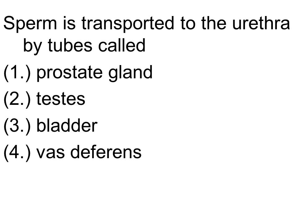Sperm is transported to the urethra by tubes called (1.) prostate gland (2.) testes (3.) bladder (4.) vas deferens
