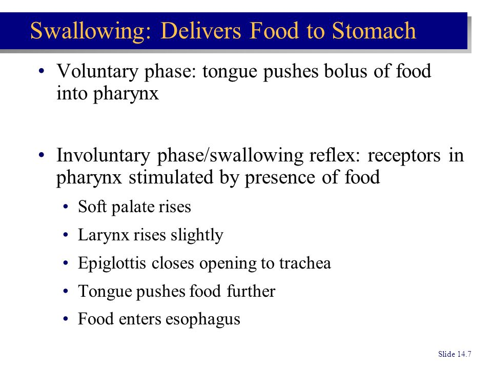 Voluntary phase: tongue pushes bolus of food into pharynx Involuntary phase/swallowing reflex: receptors in pharynx stimulated by presence of food Sof