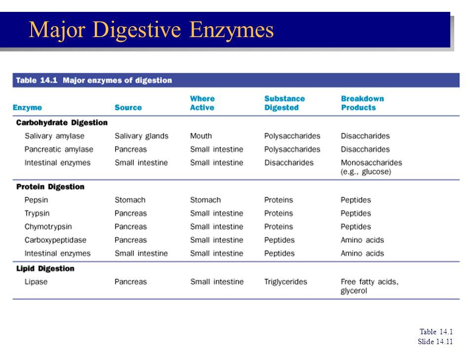 Table 14.1 Slide 14.11 Major Digestive Enzymes