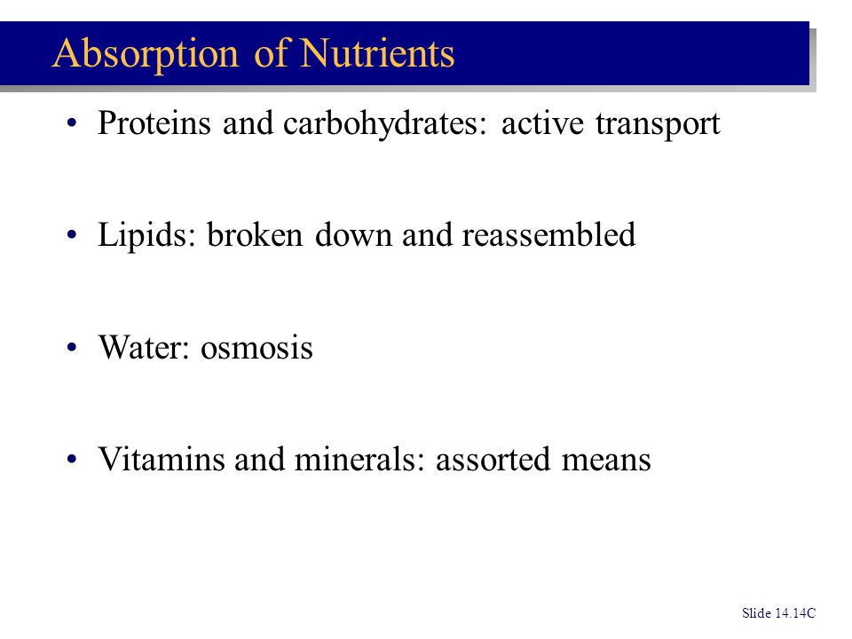 Slide 14.14C Absorption of Nutrients Proteins and carbohydrates: active transport Lipids: broken down and reassembled Water: osmosis Vitamins and mine