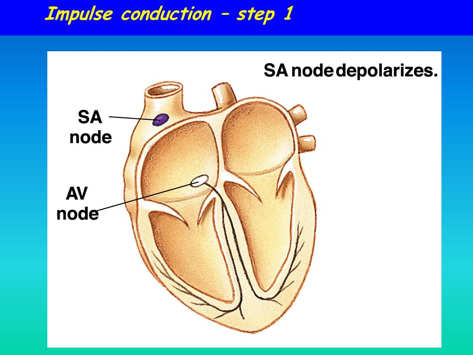 Impulse conduction – step 1