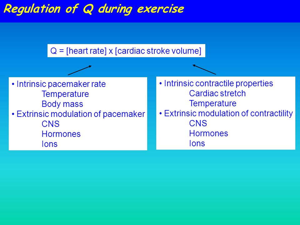 Intrinsic pacemaker rate Temperature Body mass Extrinsic modulation of pacemaker CNS Hormones Ions Intrinsic contractile properties Cardiac stretch Temperature Extrinsic modulation of contractility CNS Hormones Ions Regulation of Q during exercise