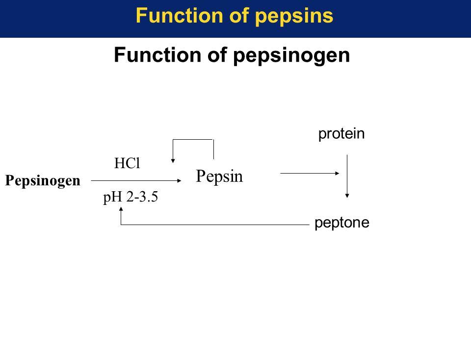 Pepsinogen Pepsin protein peptone pH 2-3.5 HCl Function of pepsinogen Function of pepsins