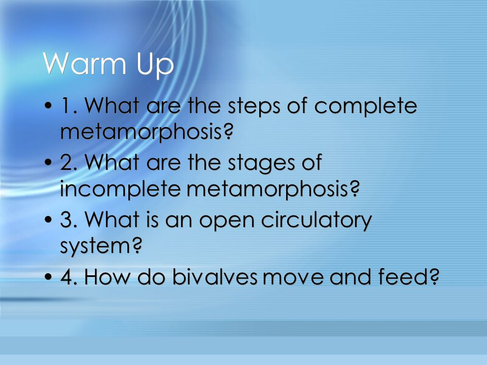 Warm Up 1.What are the steps of complete metamorphosis.