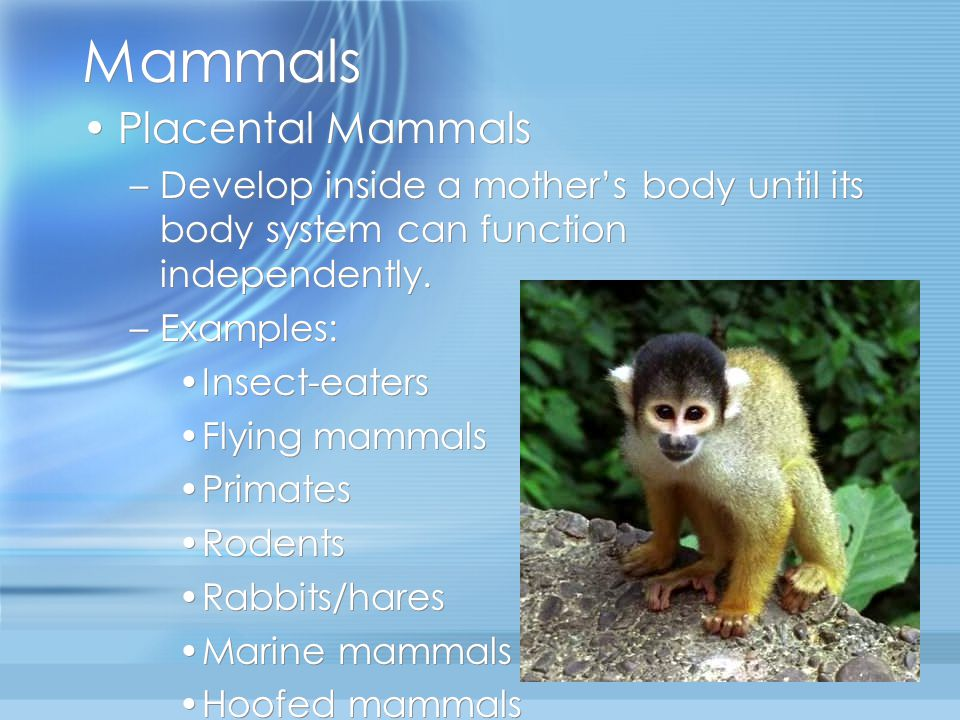 Mammals Placental Mammals –Develop inside a mother's body until its body system can function independently.