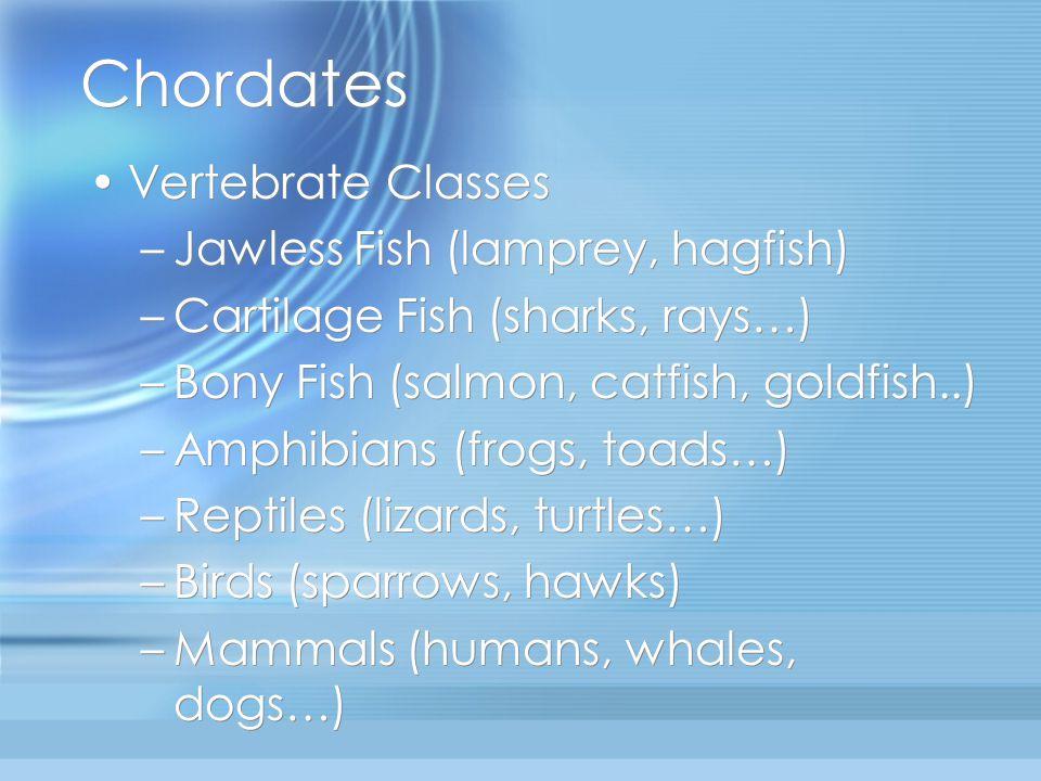 Chordates Vertebrate Classes –Jawless Fish (lamprey, hagfish) –Cartilage Fish (sharks, rays…) –Bony Fish (salmon, catfish, goldfish..) –Amphibians (fr