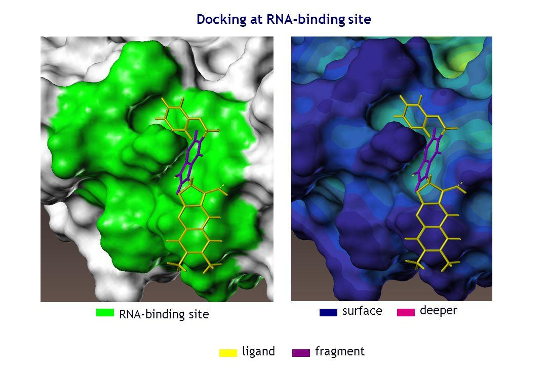 RNA-binding site surface deeper Docking at RNA-binding site fragmentligand
