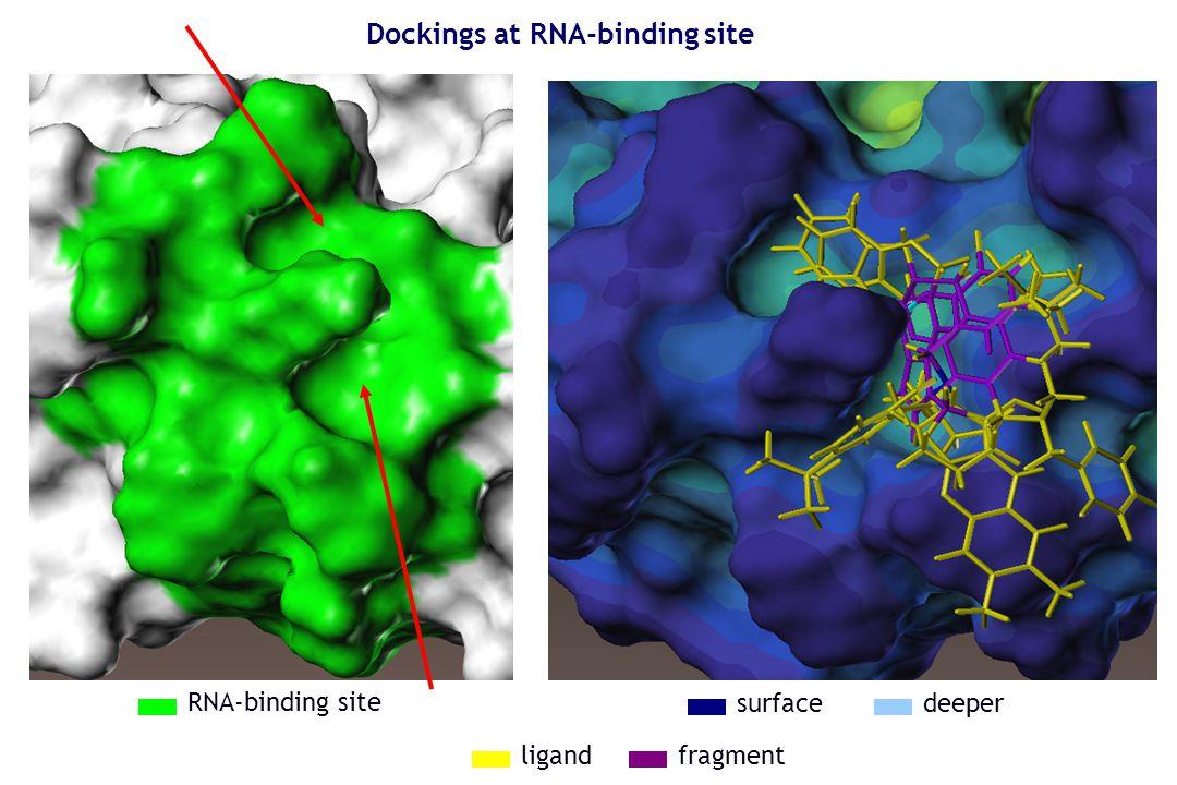 Dockings at RNA-binding site RNA-binding site surfacedeeper fragmentligand