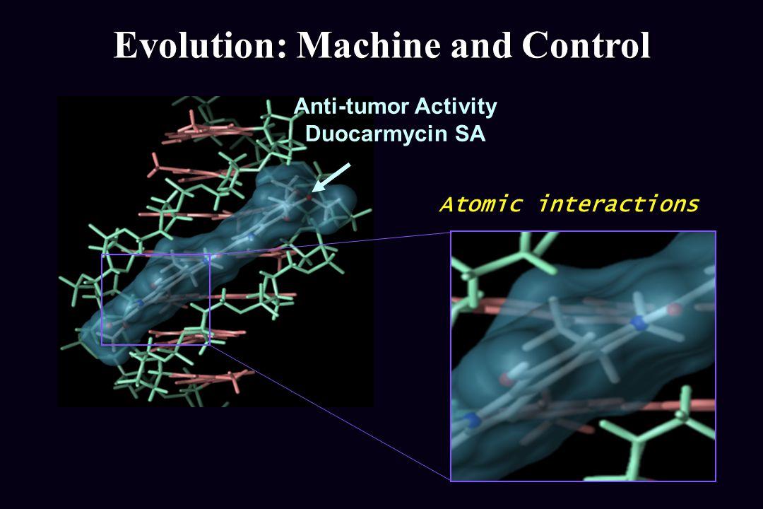 Anti-tumor Activity Duocarmycin SA Evolution: Machine and Control Atomic interactions