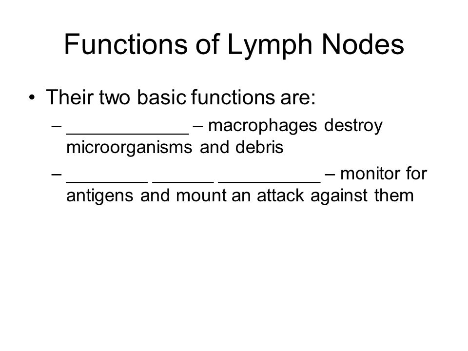 Functions of Lymph Nodes Their two basic functions are: –____________ – macrophages destroy microorganisms and debris –________ ______ __________ – mo