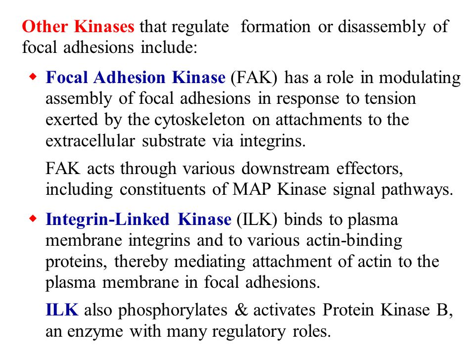 Other Kinases that regulate formation or disassembly of focal adhesions include:  Focal Adhesion Kinase (FAK) has a role in modulating assembly of fo
