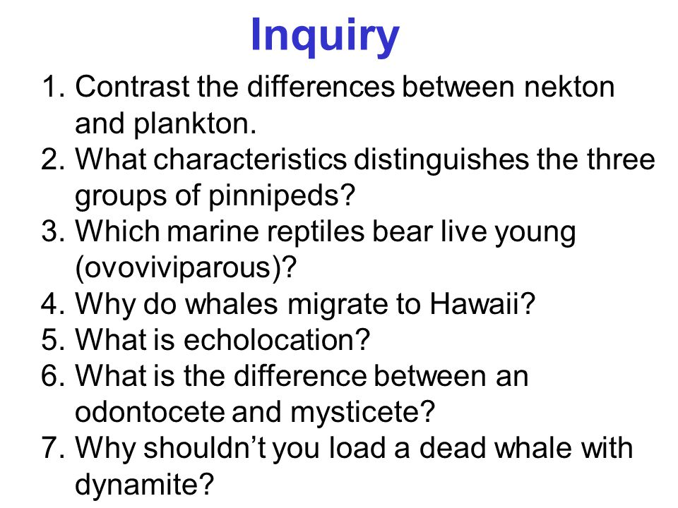 Inquiry 1.Contrast the differences between nekton and plankton. 2.What characteristics distinguishes the three groups of pinnipeds? 3.Which marine rep