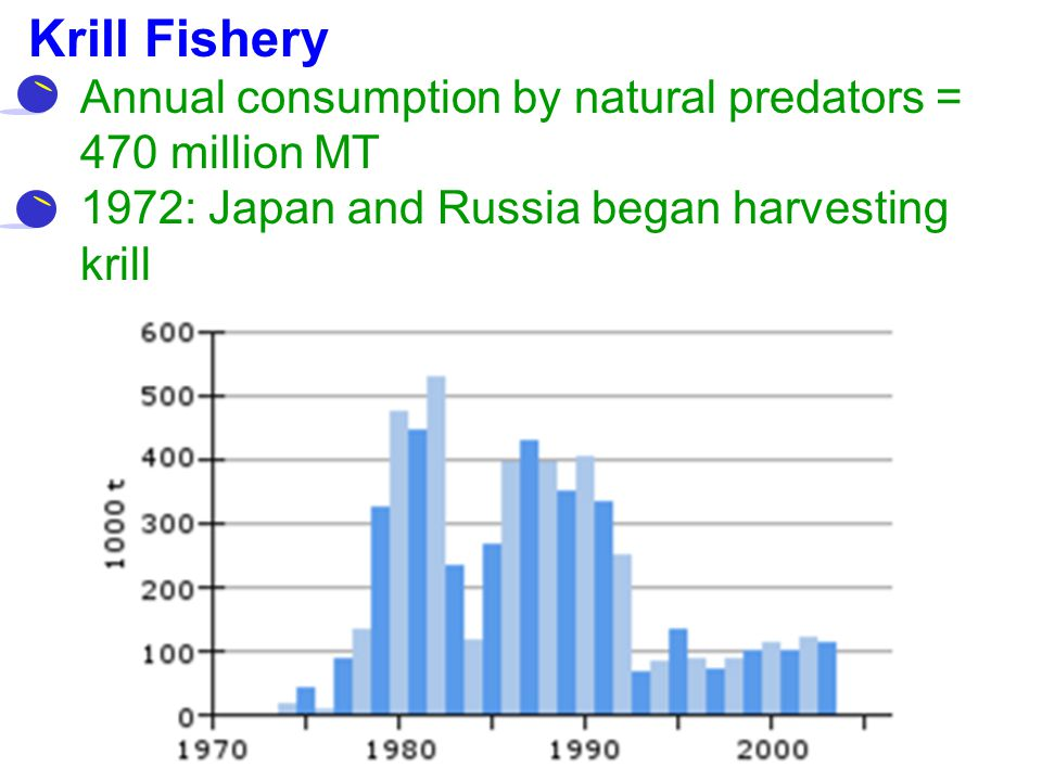 Krill Fishery Annual consumption by natural predators = 470 million MT 1972: Japan and Russia began harvesting krill