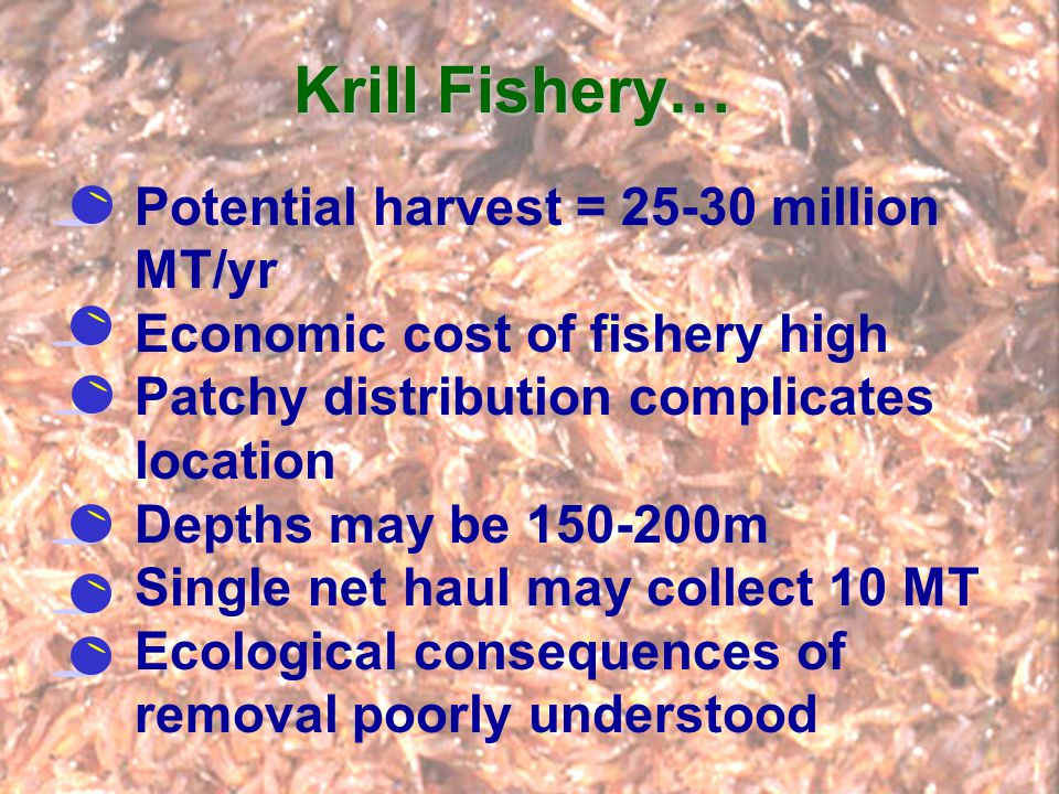 Krill Fishery… Potential harvest = 25-30 million MT/yr Economic cost of fishery high Patchy distribution complicates location Depths may be 150-200m S