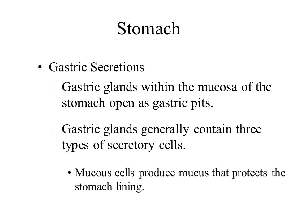 Stomach Gastric Secretions –Gastric glands within the mucosa of the stomach open as gastric pits. –Gastric glands generally contain three types of sec