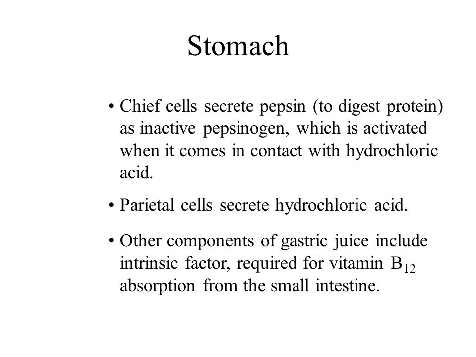 Stomach Chief cells secrete pepsin (to digest protein) as inactive pepsinogen, which is activated when it comes in contact with hydrochloric acid. Par
