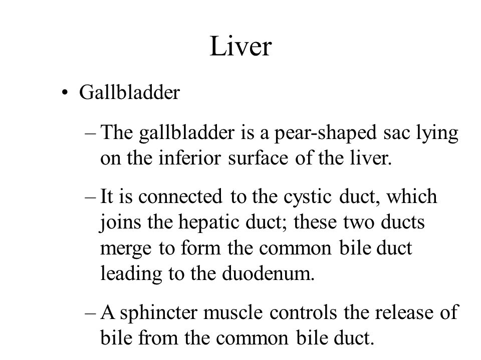 Liver Gallbladder –The gallbladder is a pear-shaped sac lying on the inferior surface of the liver. –It is connected to the cystic duct, which joins t