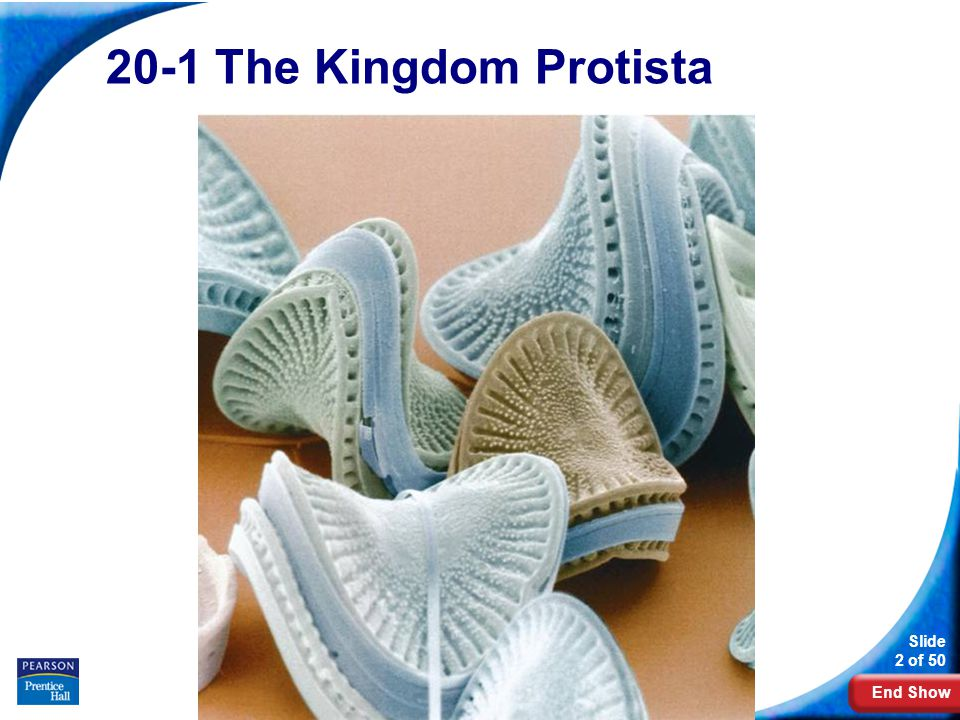 End Show Slide 2 of 50 Copyright Pearson Prentice Hall 20-1 The Kingdom Protista