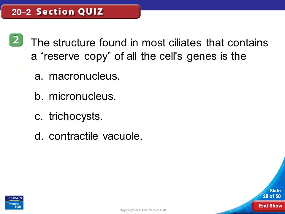 End Show Slide 28 of 50 Copyright Pearson Prentice Hall 20–2 The structure found in most ciliates that contains a reserve copy of all the cell s genes is the a.macronucleus.