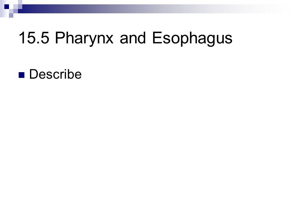 15.5 Pharynx and Esophagus Describe