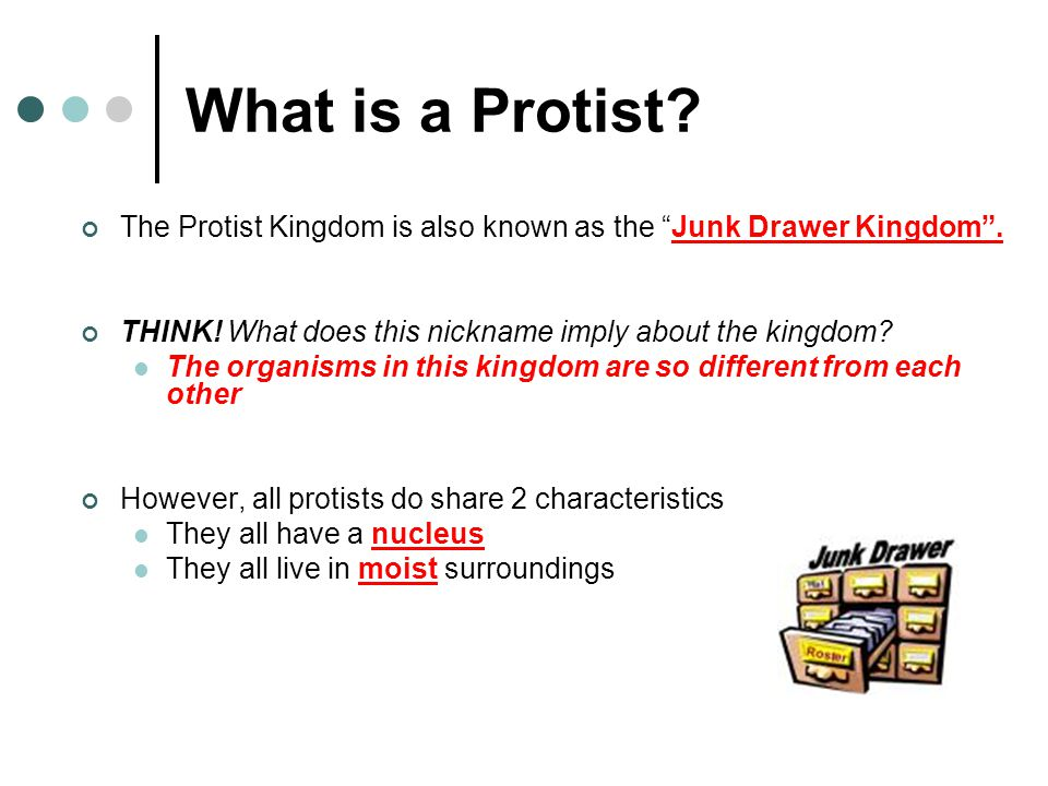 What is a Protist.The Protist Kingdom is also known as the Junk Drawer Kingdom .