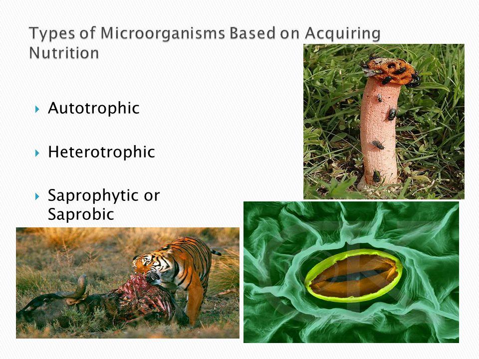  Autotrophic  Heterotrophic  Saprophytic or Saprobic