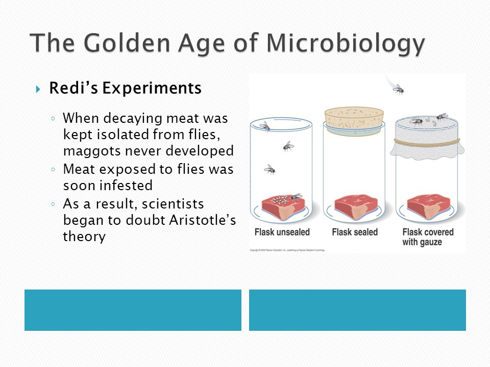  Redi's Experiments ◦ When decaying meat was kept isolated from flies, maggots never developed ◦ Meat exposed to flies was soon infested ◦ As a resul