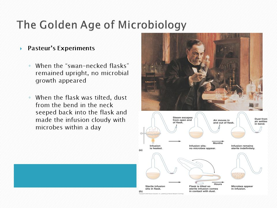 """ Pasteur's Experiments ◦ When the """"swan-necked flasks"""" remained upright, no microbial growth appeared ◦ When the flask was tilted, dust from the bend"""