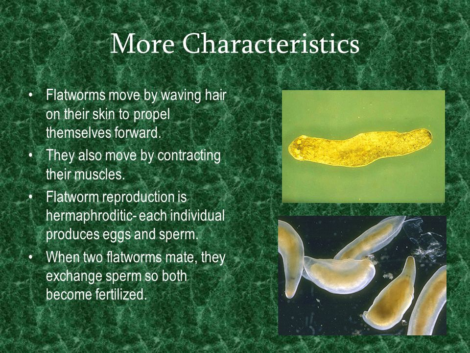 More Characteristics Flatworms move by waving hair on their skin to propel themselves forward. They also move by contracting their muscles. Flatworm r
