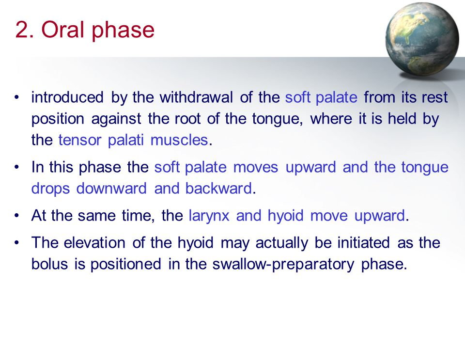2. Oral phase introduced by the withdrawal of the soft palate from its rest position against the root of the tongue, where it is held by the tensor pa