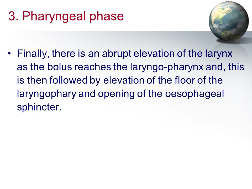 3. Pharyngeal phase Finally, there is an abrupt elevation of the larynx as the bolus reaches the laryngo-pharynx and, this is then followed by elevati