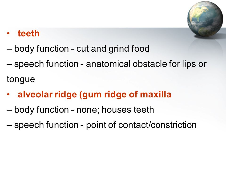 teeth – body function - cut and grind food – speech function - anatomical obstacle for lips or tongue alveolar ridge (gum ridge of maxilla – body func