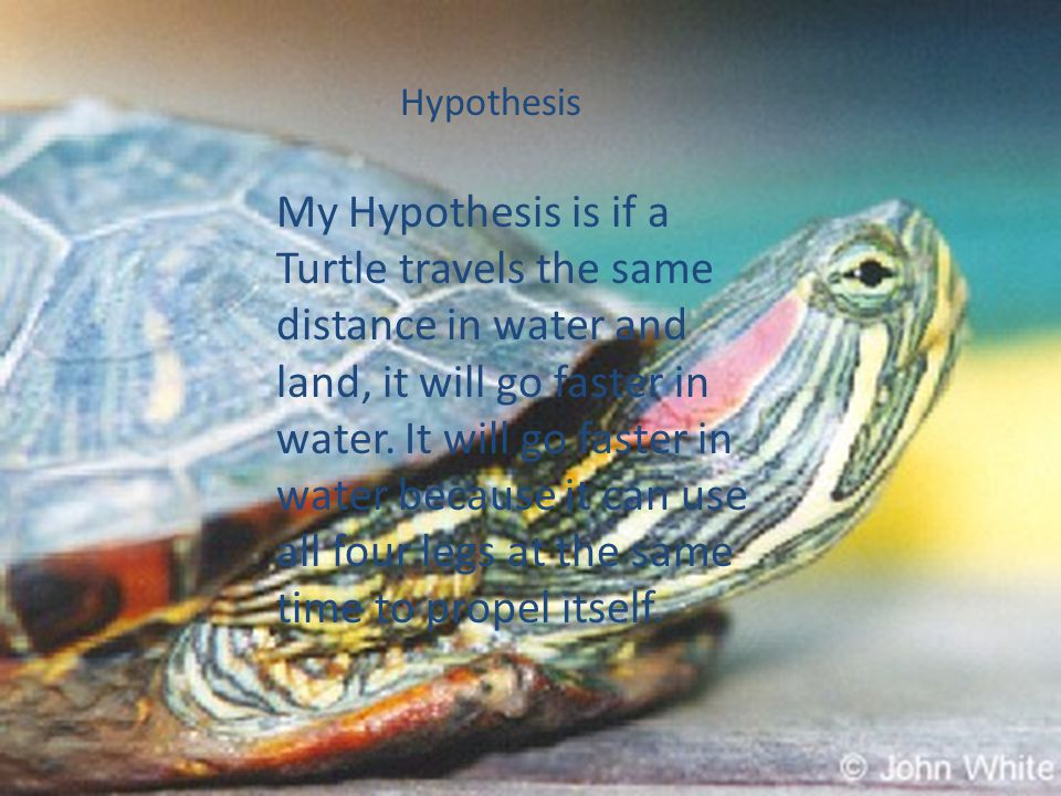 Hypothesis My Hypothesis is if a Turtle travels the same distance in water and land, it will go faster in water.