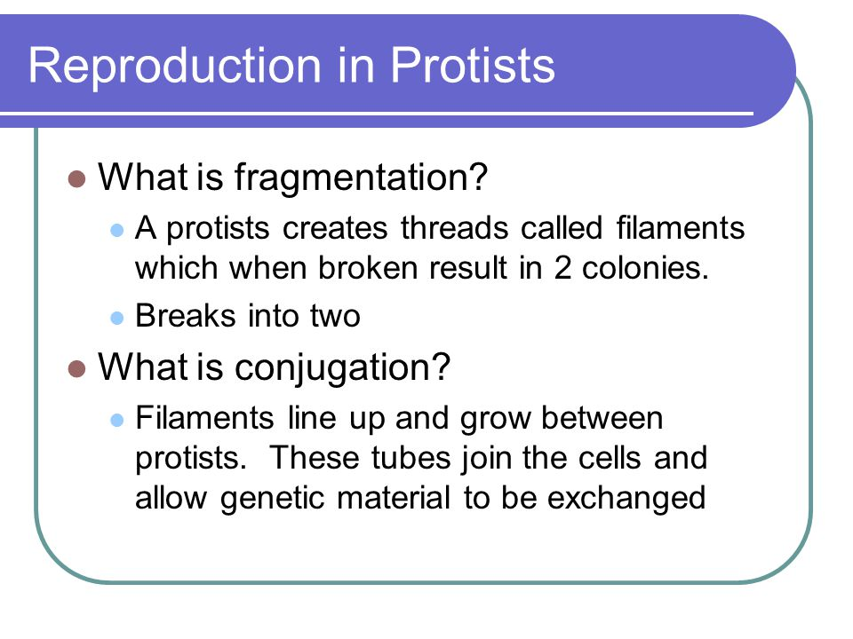 Reproduction in Protists What is fragmentation.
