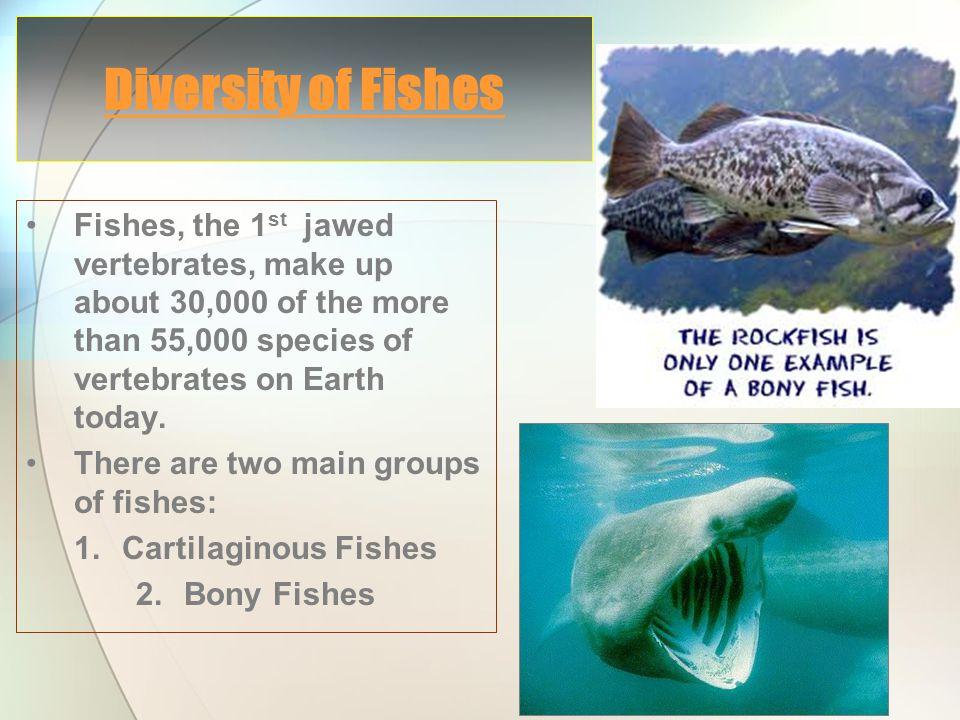 (Hagfish & Lampreys)