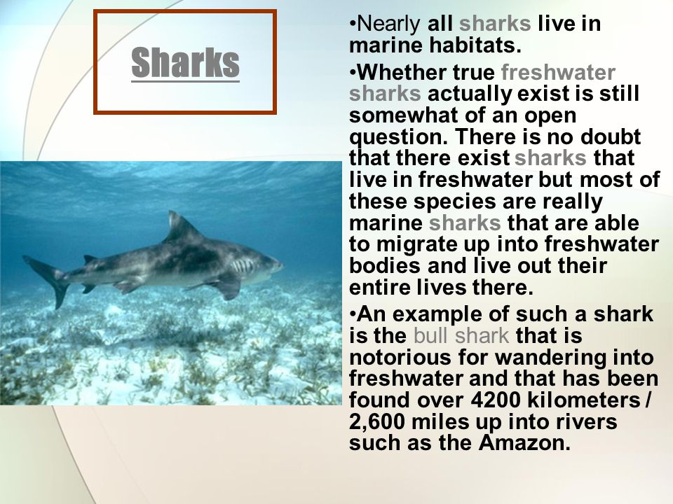 25.2 Online Review Phylum Chordata; Class Chondrichthyes 1, 2, 3123 PBS Website: Shark Attack PBS Website: Island of the Sharks Sharks 1, 2, 3, 41234 Great White Sharks 1, 2, 3, 41234 Freshwater Sharks 1, 212 Sea Rays 1, 2, 3123 Shark Quiz 1, 2, 3, 4, 5, 6123456
