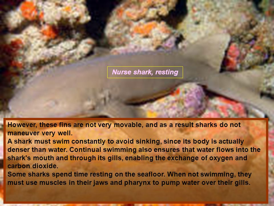 Most sharks are predators—fast and powerful with acute senses.