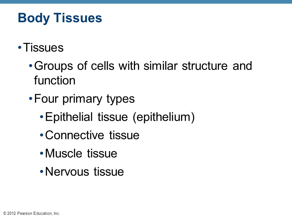 © 2012 Pearson Education, Inc. Body Tissues Tissues Groups of cells with similar structure and function Four primary types Epithelial tissue (epitheli