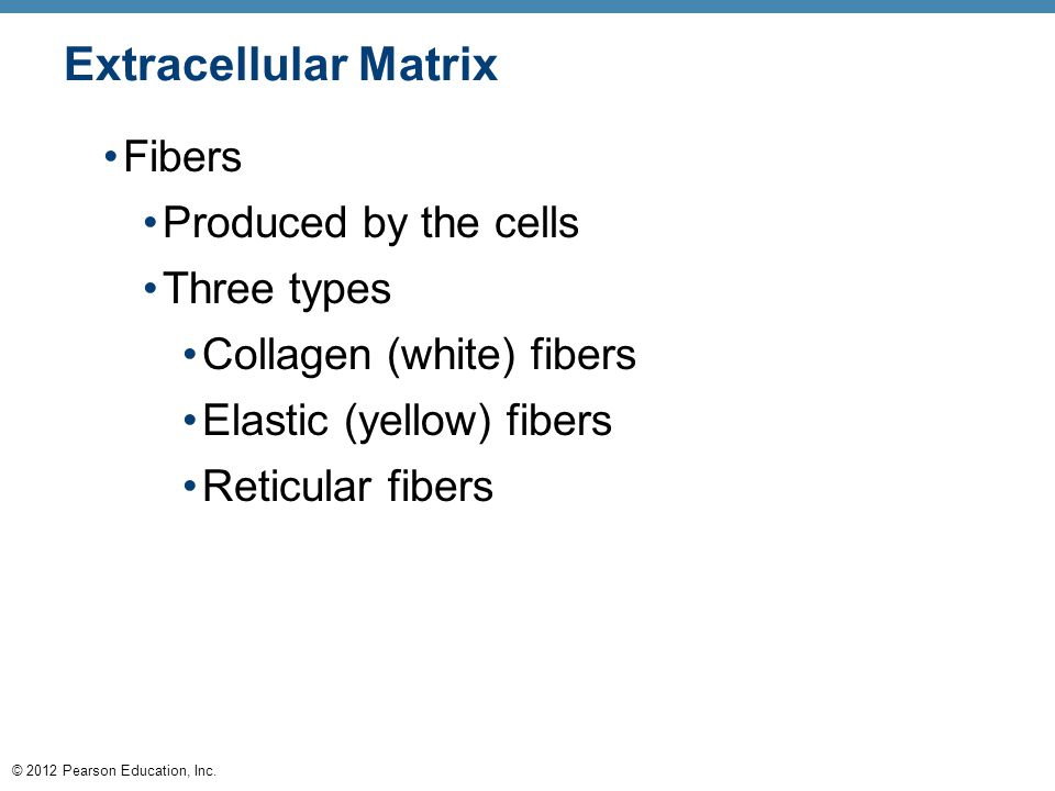 © 2012 Pearson Education, Inc. Extracellular Matrix Fibers Produced by the cells Three types Collagen (white) fibers Elastic (yellow) fibers Reticular
