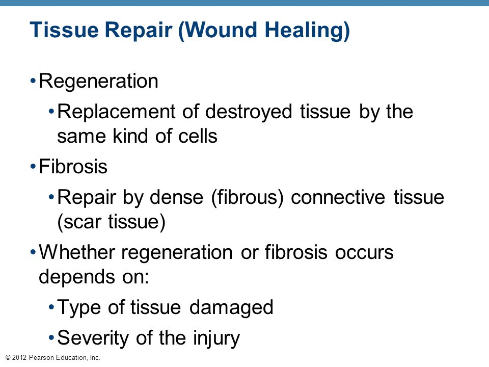 © 2012 Pearson Education, Inc. Tissue Repair (Wound Healing) Regeneration Replacement of destroyed tissue by the same kind of cells Fibrosis Repair by