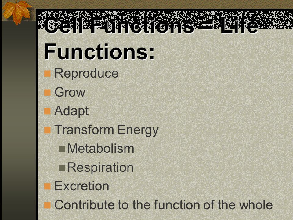 Cell Functions = Life Functions: Reproduce Grow Adapt Transform Energy Metabolism Respiration Excretion Contribute to the function of the whole