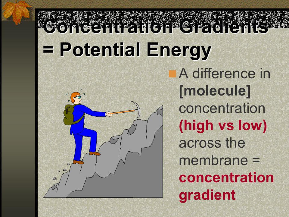 Concentration Gradients = Potential Energy A difference in [molecule] concentration (high vs low) across the membrane = concentration gradient