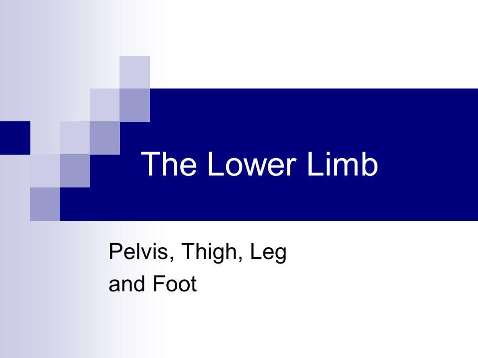 Joints of Lower Limb Hip (femur + acetabulum)  Ball + socket  Multiaxial  Synovial Knee (femur + tibia)  Hinge (modified)  Biaxial  Synovial  Contains menisci, bursa, many ligaments Knee (femur + patella)  Plane  Gliding of patella  Synovial pg 517