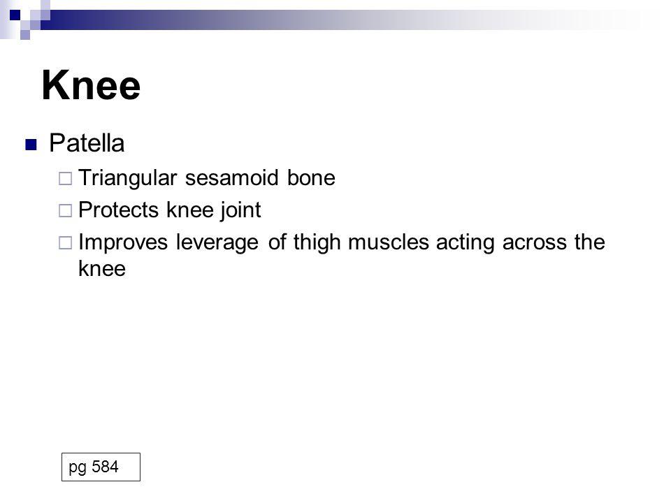Sacral Plexus Inferior gluteal nerve  Motor Gluteus maximus Posterior femoral cutaneous nerve  Sensory Inferior buttocks, posterior thigh, popliteal fossa Pudendal nerve  Sensory External genitalia, anus  Motor Muscles of perineum pg 464
