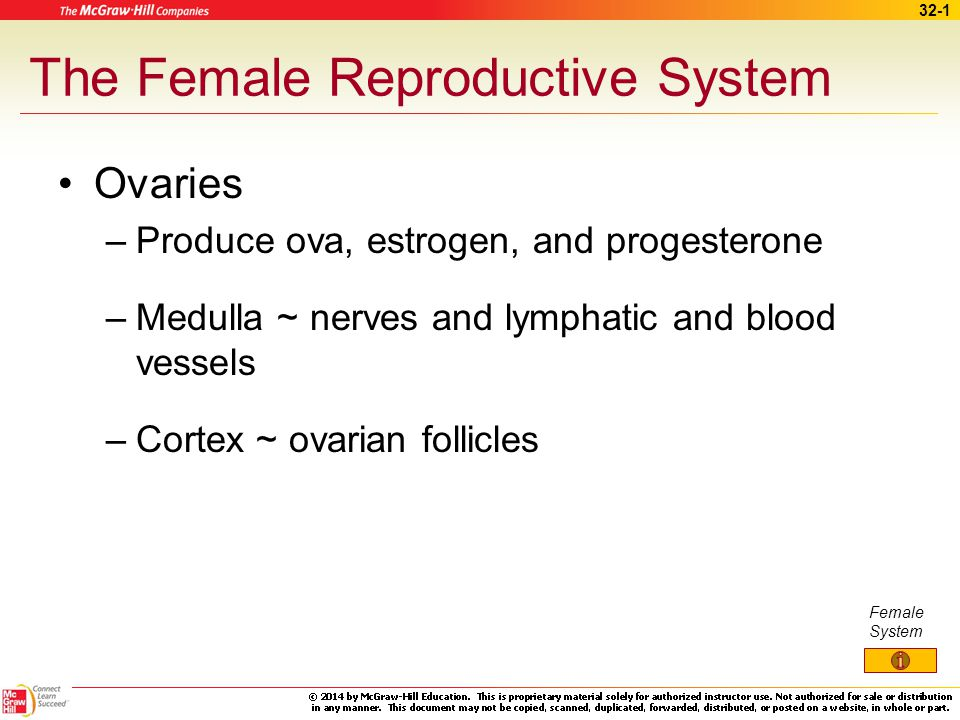 32-11 Reproductive Cycle Menstrual cycle –Regular changes in uterine lining –Shedding of lining and bleeding Menarche – first menstrual period Menopause – termination of cycle due to normal aging of ovaries