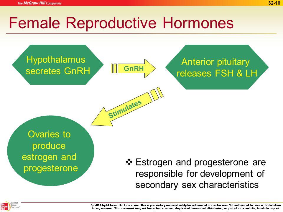 32-9 Erection, Lubrication, and Orgasm Nervous stimulation –Clitoris becomes erect –Bartholin's glands activate –Vagina elongates Orgasm –Sufficient s